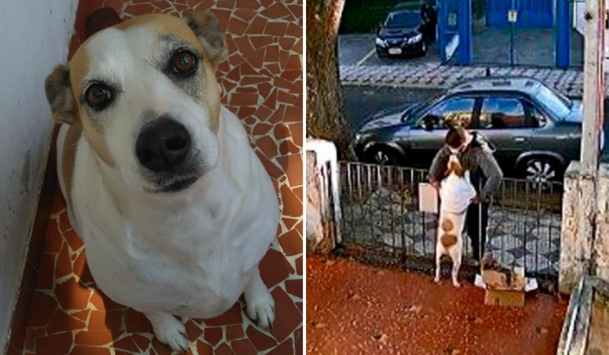Vídeo de uma cachorra sendo assaltada viraliza na web