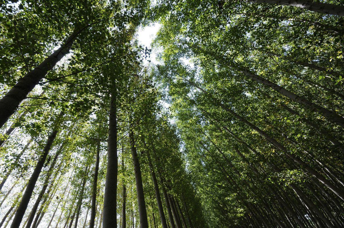 Reflorestamento: por que é uma prática importante