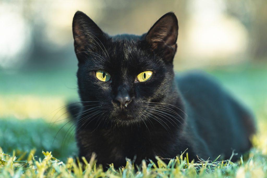 O gato preto pode indicar infidelidade em um relacionamento.