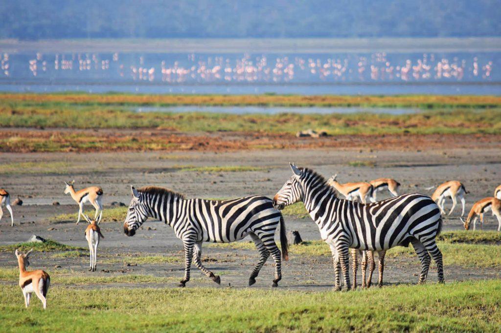 A Tanzânia é conhecida por sua paisagem natural e vida animal.