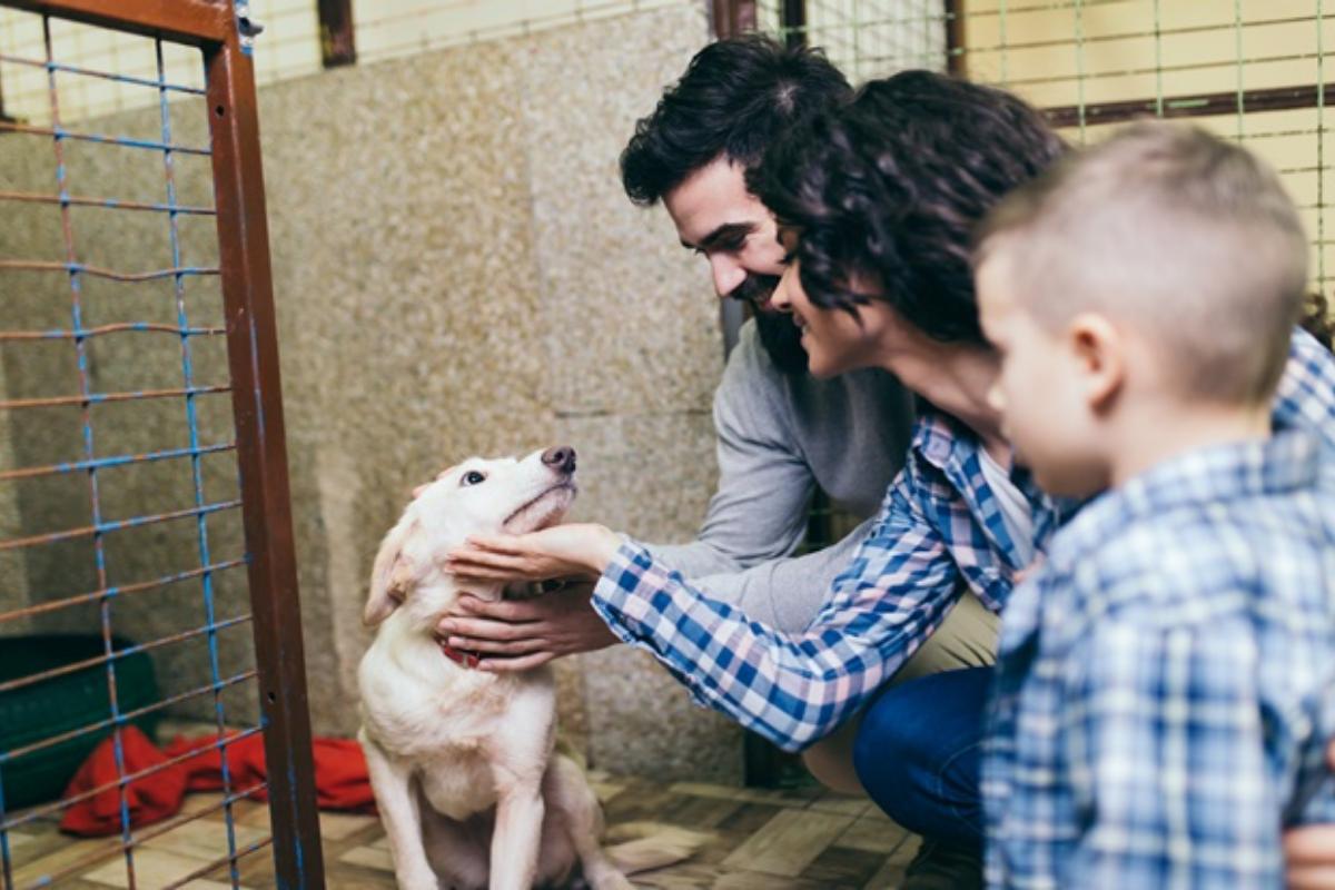 Guia do Pet: O que você precisa saber antes de adotar um animal