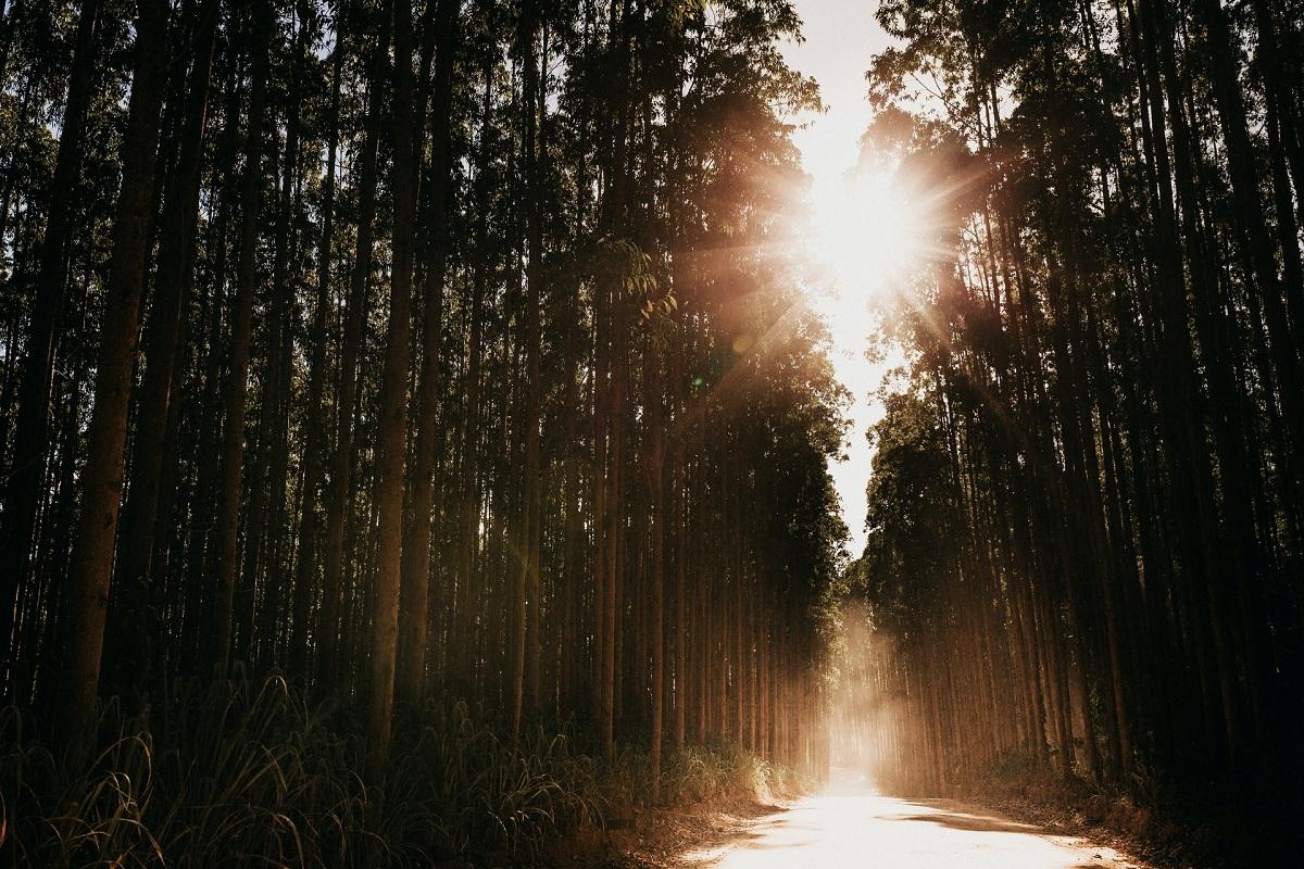 Entenda um pouco mais do processo do reflorestamento comercial