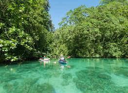 Nikko Bay é um santuário das águas-vivas no Palau.
