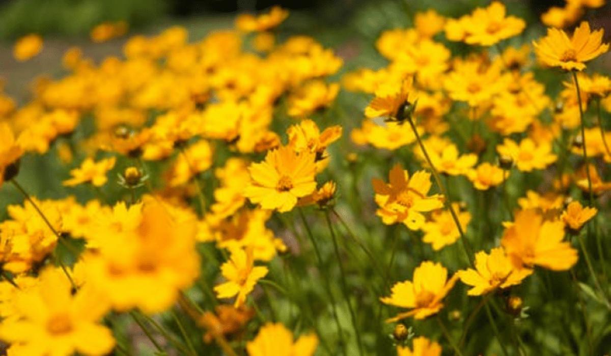 Início da primavera: conheça o equinócio e tudo sobre a nova estação
